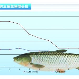 草魚︰存塘量大,緩(huan)漲價——《duan) chan)前(qian)沿》2019年8月刊(kan)市場趨勢