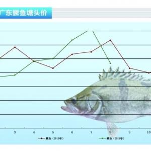 鱖(gui)魚︰新魚上市,一個(ge)月暴跌30元/斤——《水產前沿》2019年9月刊(kan)市場趨勢