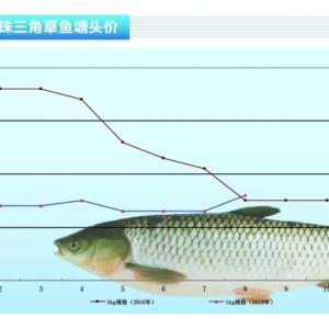 草魚︰養戶惜售,價格維穩——《duan) chan)前(qian)沿》2019年9月刊(kan)市場趨勢