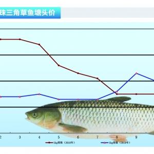草魚︰價格平(ping)淡喜(xi)大魚——《duan) chan)前(qian)沿》2019年11月刊(kan)市場趨勢
