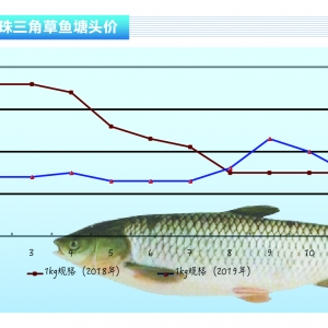 草魚︰集中出魚行情(qing)冷——《duan) chan)前(qian)沿》2020年1月刊(kan)市場趨勢