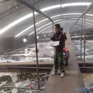山(shan)東東營全力(li)保障水產養殖生產穩定,615萬尾(wei)對蝦(xia)苗安全運抵