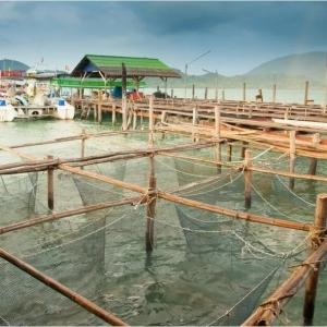 吃魚營養又安全!人類重大疫病傳(chuan)染源都來自陸生野生動物而非水產養殖動物