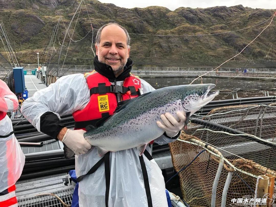 智利三文鱼最大单体生产商麦迪公布2020在华重大系列决策!