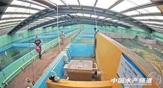 太猛了!全程可控!50平方米水池一季度�a量最高可�_到1000斤!