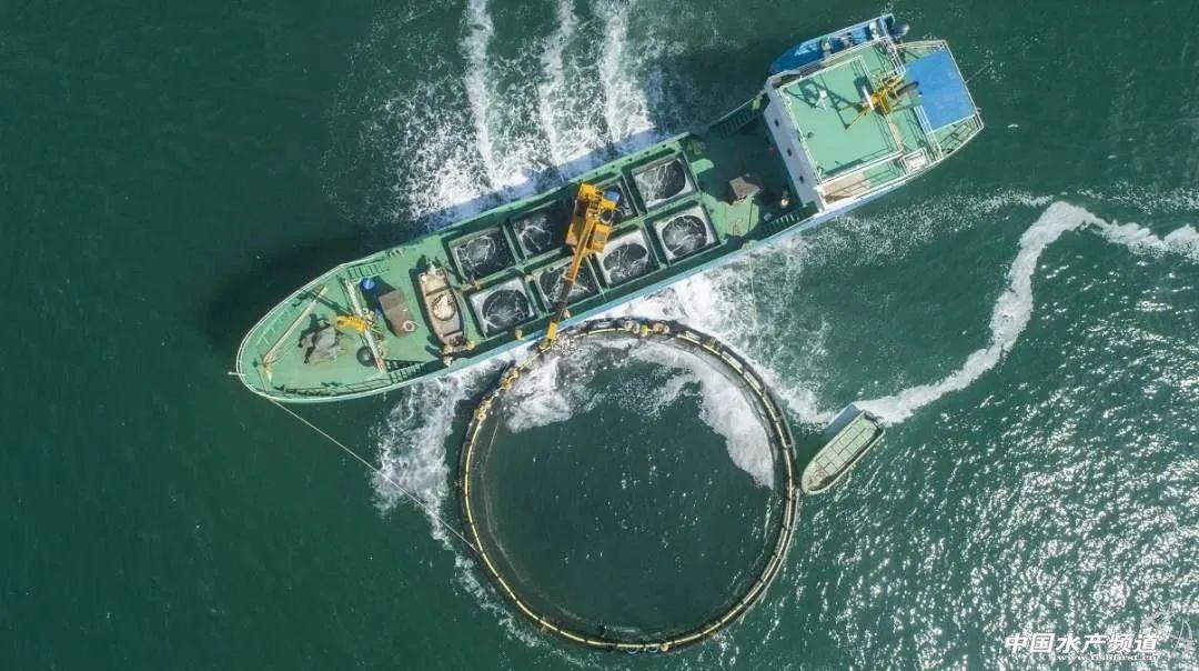 阳江海洋渔业由浅海转战深海 中