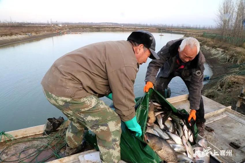 """把鱼风干卖,产值过亿,利润提高15%!襄州这家水产企业如何创""""铭牌""""!"""